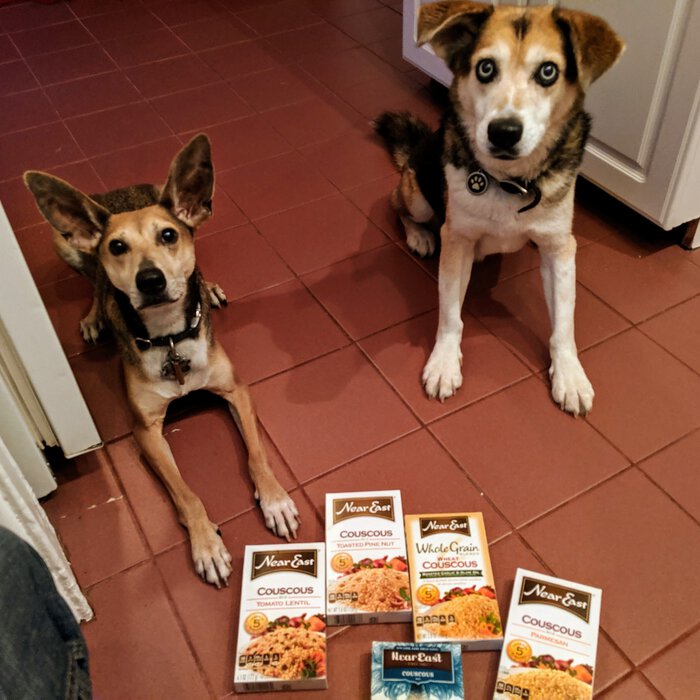 Our two dogs sitting in front of couscous. Click for full size.